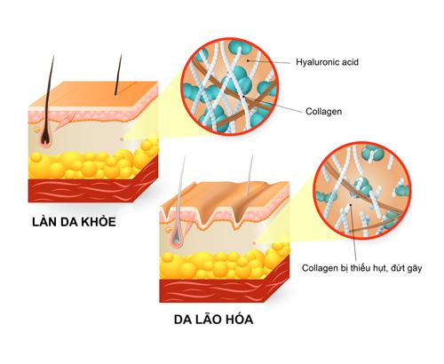 Kết hợp collagen và HA tăng hiệu quả dưỡng da của bạn