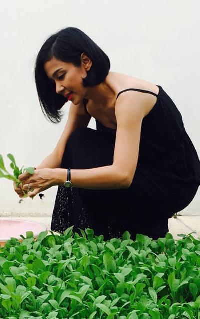 Ngắm mùa quả bội thu trong nhà vườn của Việt Trinh