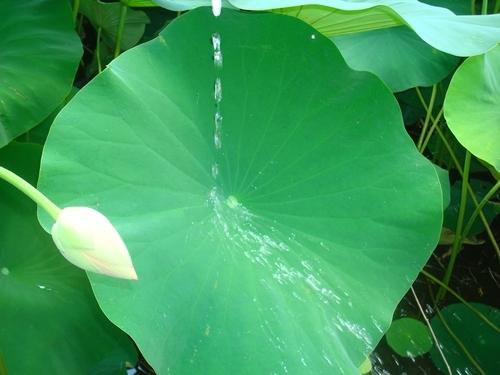 Ăn 10 loại lá này, mỡ cứng đầu đến mấy cũng biến ngay không phải nghĩ