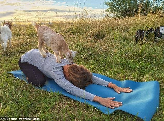 Bộ môn Yoga cùng động vật khiến phụ nữa Anh phát cuồng