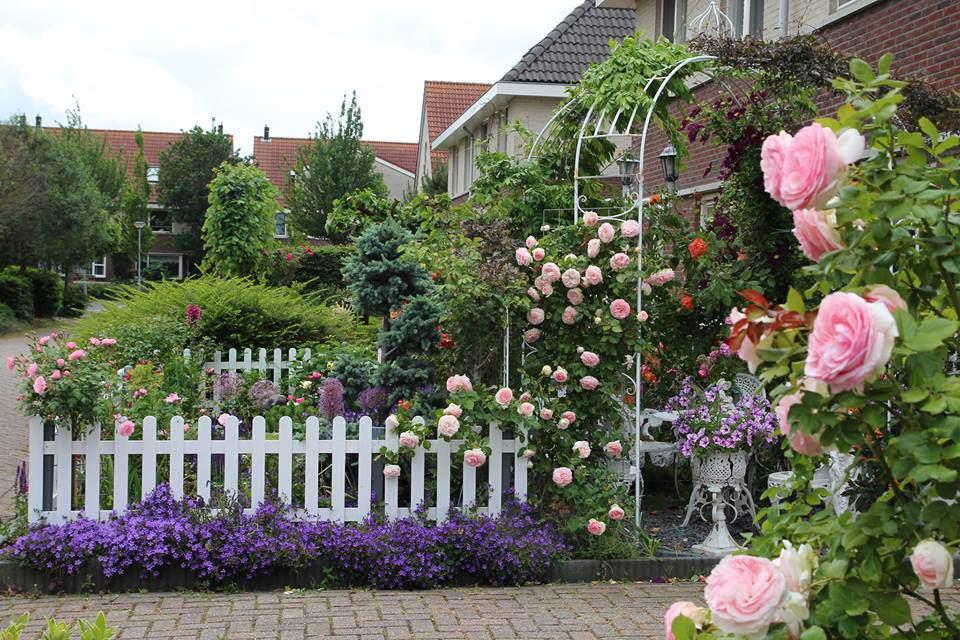 Ngôi nhà phủ kín hoa hồng rực rỡ đẹp như trong mơ
