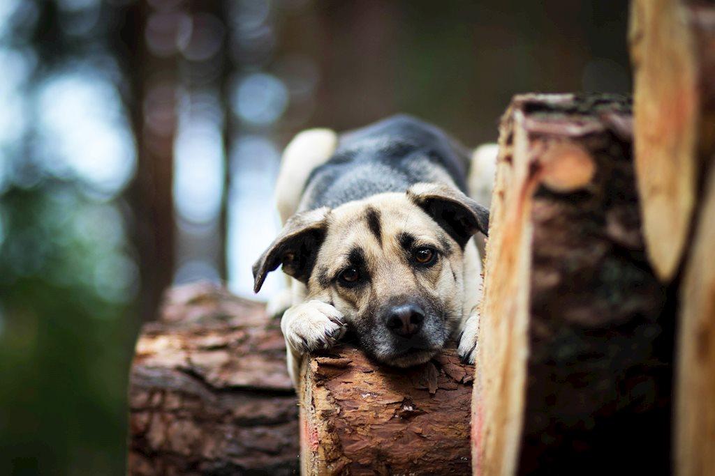 Những chú cún đáng yêu nhất hành tinh
