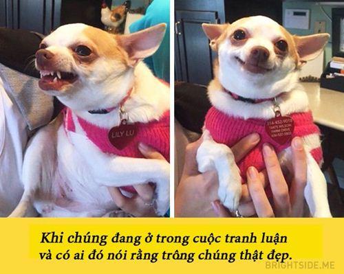 Những bức ảnh chứng minh người yêu bạn cún rất quan trọng