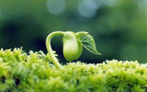 Khả năng giảm trừ nguy cơ ung thư của mầm đậu nành