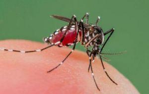 Mẹo đơn giản để nhà không có muỗi