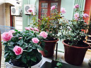 Ngắm những ngôi nhà thơm ngát hương hoa hồng