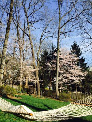 Hình ảnh tuyệt đẹp của khu vườn anh đào, tulip của Bằng Lăng