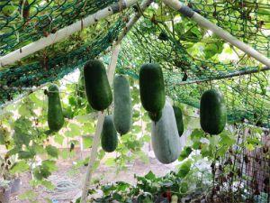 Vườn nghiệp dư ở nhà phố tuyệt đẹp của ông bố khéo tay