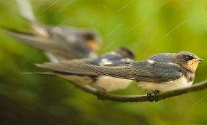 Vẻ động vật đẹp mê hồn trong mưa của Hà Nội