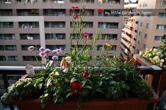 Những bông hoa nở rực rỡ nhờ vỏ chuối, cọng rau