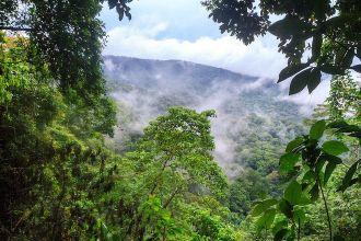 Khu đầm lầy đầy sinh vật độc giữa Trung và Nam Mỹ