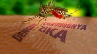Muỗi Zika đốt ban ngày trong khi người Việt chỉ mắc màn ban đêm