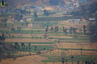 Ngắm cây sa mộc giữa cao nguyên đá Đồng Văn