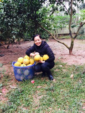 Vườn cây ăn quả ở Sơn Tây của Chiều Xuân