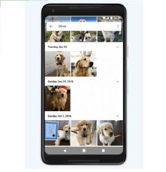 Google Photos đã có thể nhận diện thú nuôi