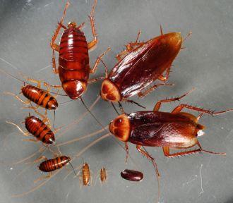 Những loại côn trùng có hại nào bạn nên biết