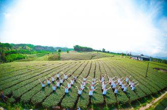 Đây mới là đồi chè đẹp nhất Việt Nam!
